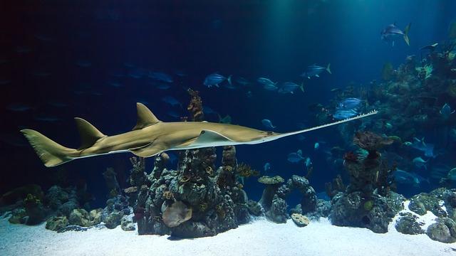 visit aquarium