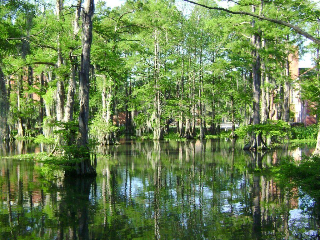 swamp-699592_1280